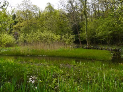 The pond at Bank Well
