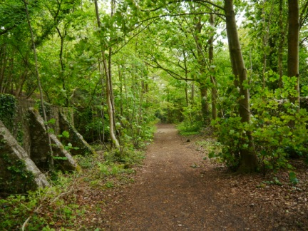 The main path along the bottom of Eaves Wood