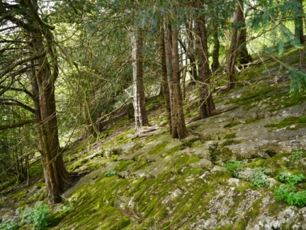 Limestone slabs in the woods of Heald Brow