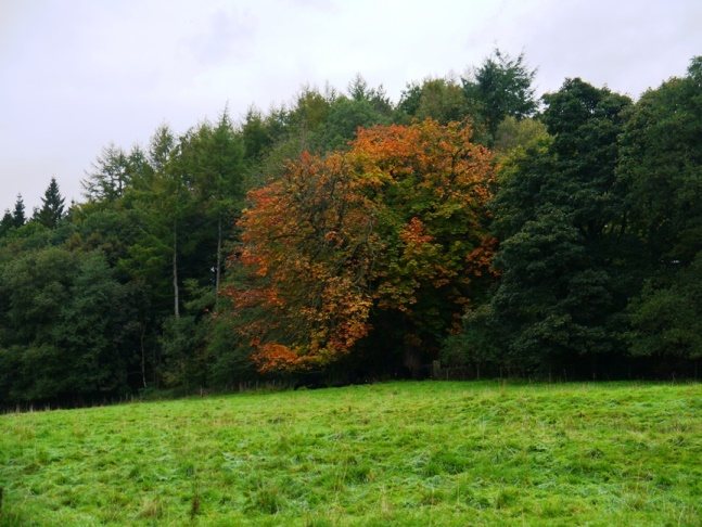 This autumnal tree was very striking
