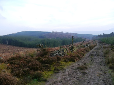 Beacon Hill from a deforested part of Grindleton Forest
