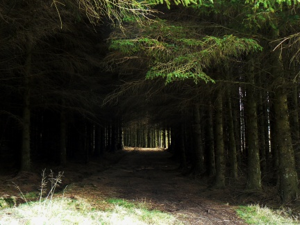 The path leading into another section of Gisburn Forest