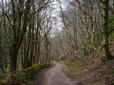 The tree-lined path through Grizedale