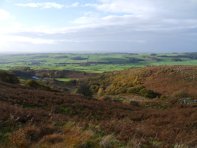 Looking down on Rigg Wood and the lower reaches of Windy Clough