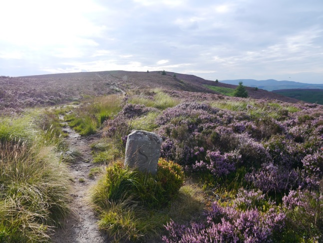 Boundary stone on the way to Long Crag