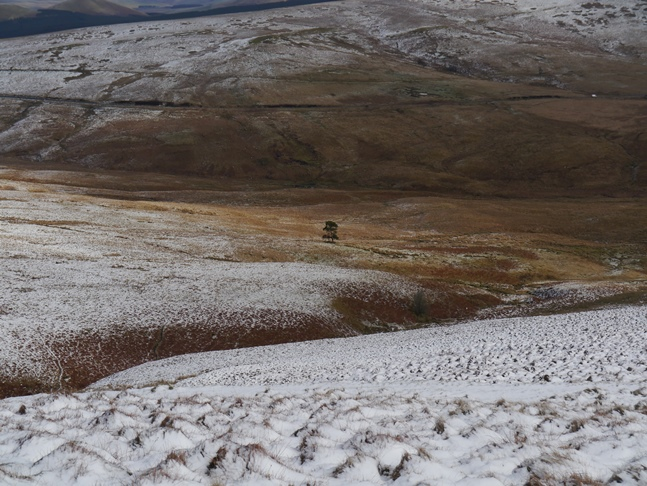 A lonely tree at the head of Redesdale