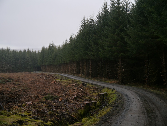 The forest track I followed through Redesdale Forest