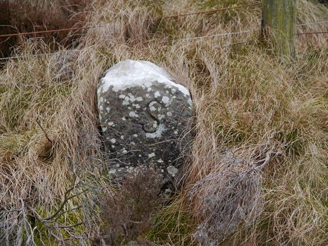 One of a number of boundary stones along the fence