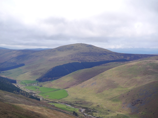 The Schil from Hare Law