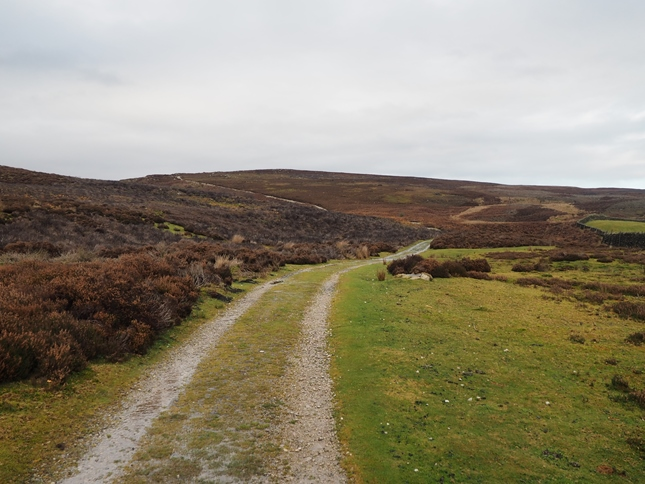 The track leading out of the woods and on to Barden Fell