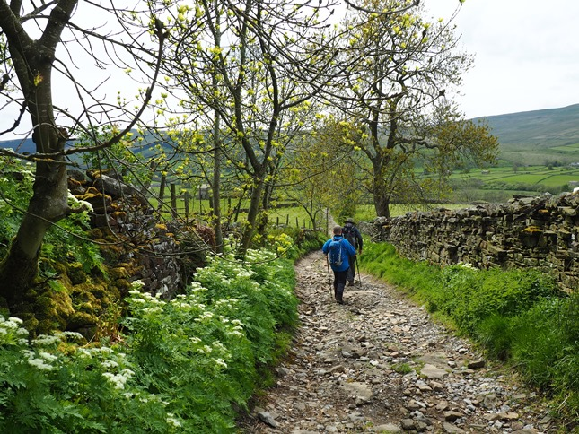 The stony Busk Lane between Stalling Busk and Marsett
