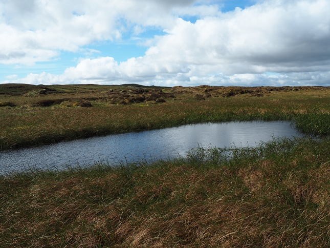 Tiny Fleet Moss Tarn