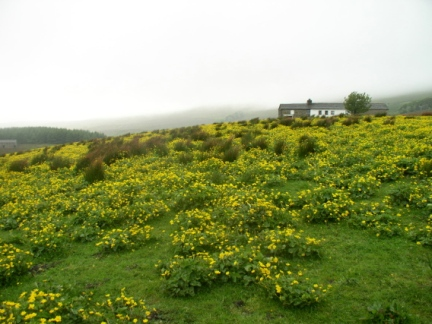 A flowery meadow in Grisedale