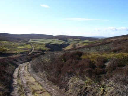 One of the tracks on Hazelwood Moor