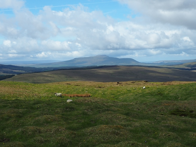 Ingleborough from Woldside