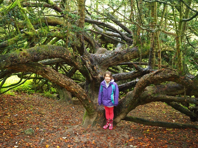 Rhiannon next to the 'money tree'