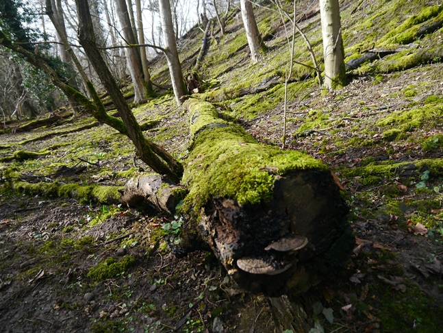 A mossy log in Cover Banks