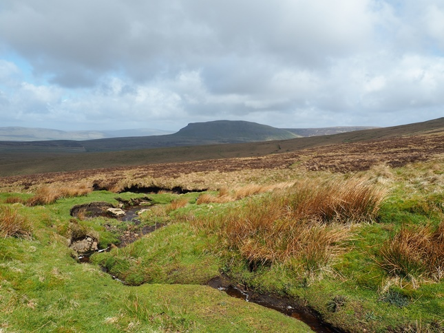Pen-y-ghent from near the top of Gingling Beck