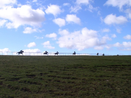 Horses being put through their paces on Middleham Low Moor