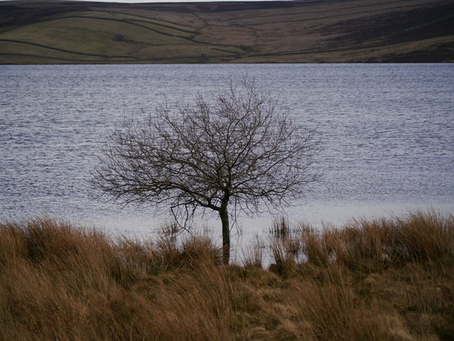 A lonely tree by Grimwith Reservoir
