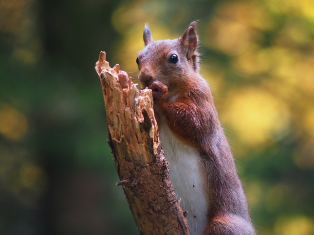 It was a wonderful experience to get so close to the red squirrels