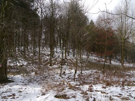 A wintry Strid Woods