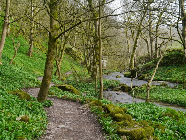 Gordale Beck and the path through Wedber Wood