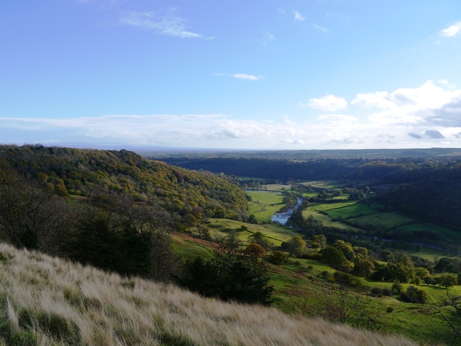 Whitecliffe Wood and Swaledale
