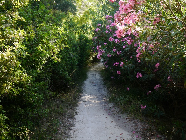 Oleander lined path heading for the gorge