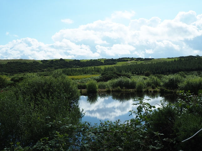 One of a number of small ponds near the visitor centre