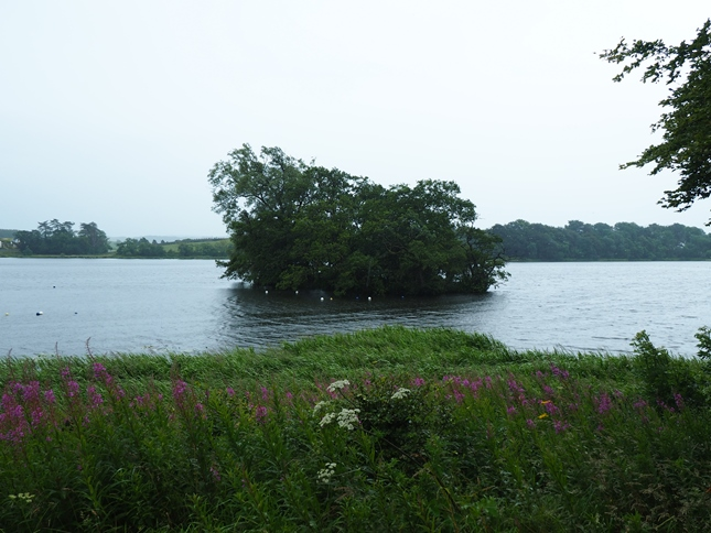 A small wooded islet on Carlingwark Loch, some of these islets are thought to have originally been crannogs
