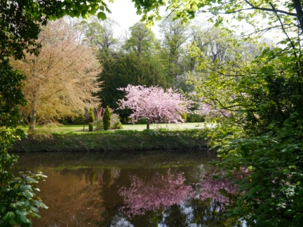 A blossom tree across the Nidd