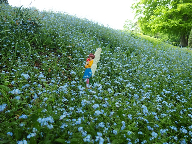 A fairy among the forget-me-nots