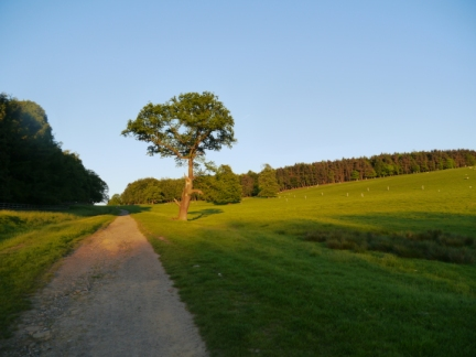 The Leeds Country Way as it heads for Lodge Hills