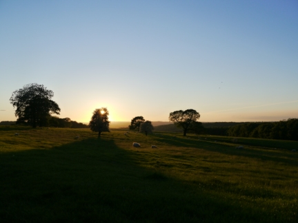 Late evening sunshine over Harewood Park