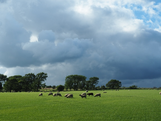 One of many sheep pastures in Haverah Park