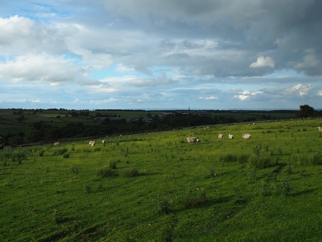 More sheep pastures in Haverah Park