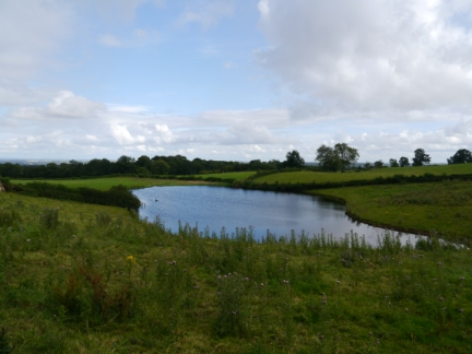 The pond near Morcar Grange