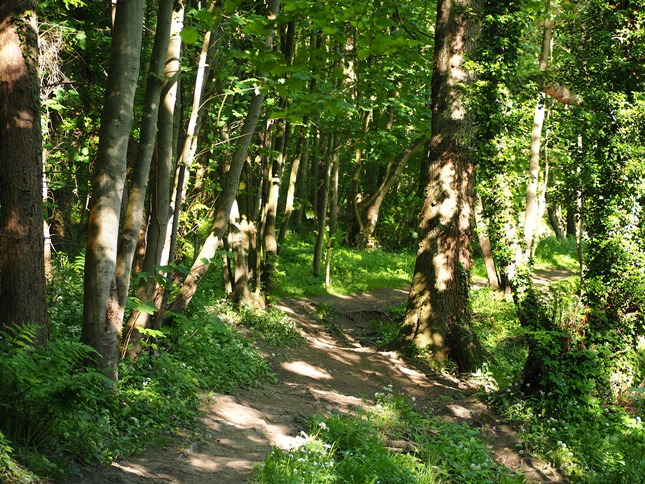 The lovely path through the woods of Scotton Banks
