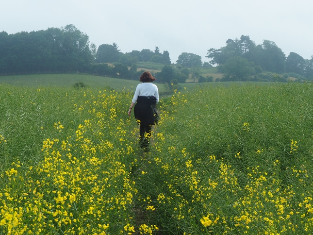 Approaching Crayke across a field of rapeseed