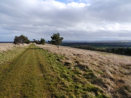 Looking along the wide path on Caulkleys Bank