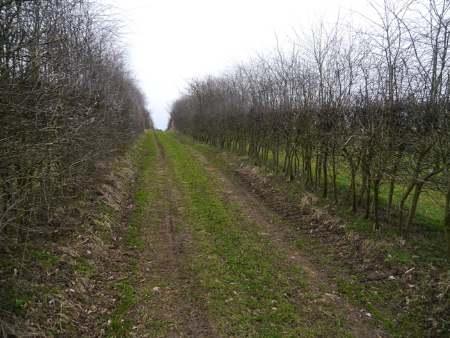 The hedgerowed path leading to Potter Hill Farm