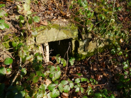 The small Holy Well hidden amongst the brambles