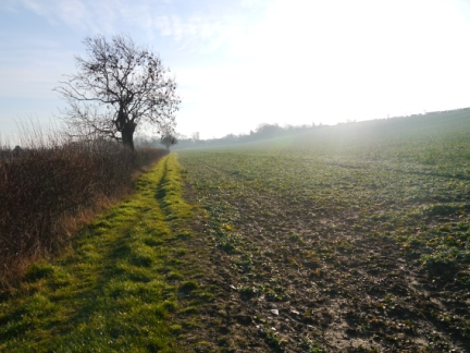 The fieldside path on the way to Appleton-le-Street
