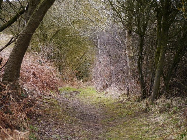 The lovely wooded path dropping down into Mugdale
