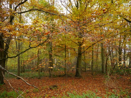 Autumn colours in Ray Wood