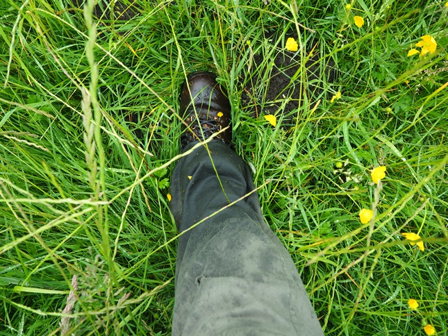 The wet grass and buttercups quickly soaked our trousers and boots