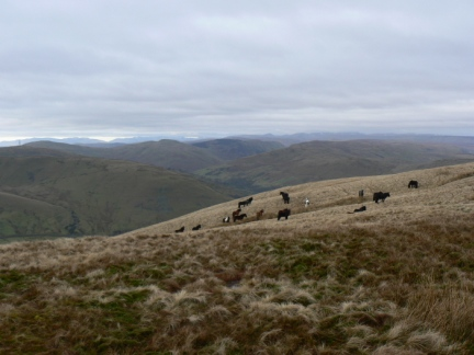 Fell ponies on the western slopes of Blease Fell