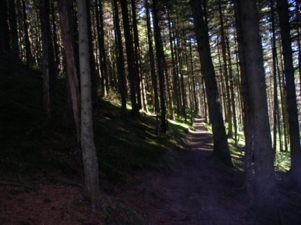 In the plantations of Whinlatter Forest