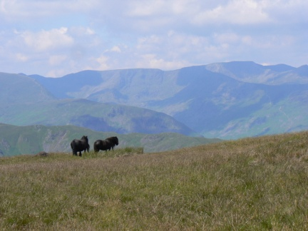 A couple of fell ponies on Wether Hill
